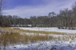 Dried Grasses and Snow-covered Wetlands in Winter, Willimantic, CT
