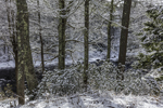 Woodlands and Millers River after Fresh Snowfall, near Bearsden Conservation Area, Athol, MA