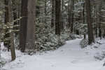 Old Country Road through Pine Forest in Winter, Fitzwilliam, NH