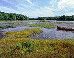 Floating Bog with Horned Bladderworts and Canoe, Harvard Pond