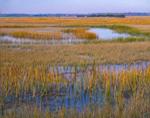 Salt Marsh at High Tide, Ocean City, NJ