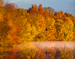 Trees with Bright Yellow and Orange Foliage in Early Morning Light along Shoreline of Middle Branch Reservoir, Town of Southeast, NY