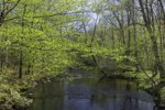Eightmile River in Spring at Devil's Hopyard State Park, East Haddam, CT