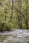 Upper Wood River in Early Spring, Wood-Pawcatuck Watershed Association, Village of Hope Valley, Hopkinton, RI