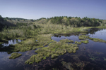 Aerial View of Freshwater Marsh on Beachdale Pond on Pachaug River in Early Spring, Pachaug State Forest, Voluntown, CT