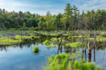 Wetlands along East Branch Ware River in Spring, Hubbardston, MA