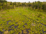 Wetlands on Tributary of East Branch Ware River in Spring, Hubbardston, MA