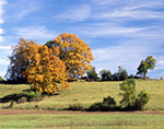Trees in Field with Fall Foliage, Blue Sky and Cirrus Clouds
