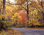 Fall Foliage along Johnstown Road in Harriman State Park