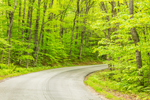 Country Road through White Mountain National Forest in Spring, Batchelders Grant, ME