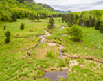 Wetlands along Evans Brook in Spring, White Mountain National Forest, Batchelders Grant, ME