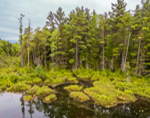 Forests along Shoreline of Red Eagle Pond in Spring, White Mountain National Forest, Albany, NH