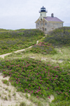 Beach Roses and North Light, Block Island, RI