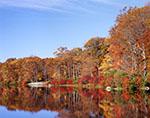 Fall Foliage along Shoreline of Lake Skannatati, Harriman State Park
