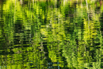 Abstract of Forest Reflections in Congdon Cove, off Point Judith Pond, South Kingstown, RI