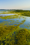 Aerial View of Wetlands on Block Island National Wildlife Refuge, Great Salt Pond, Block Island, RI