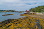 Seaweed along Rocky Shoreline near Lobster Shack on Mackerel Cove at Low Tide, Bailey Island, Town of Harpswell, ME