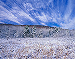 Spectacular Cirrus Clouds over Cattail Marsh and Shrub Swamp after Snowfall