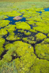 Aerial View of Wetlands and Beaver Lodge at Royalston Eagle Reserve, Royalston, MA