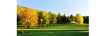 Late Evening Light on Maples and Conifers in Fall at Tower Ridge Country Club