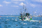 Sea Gulls Surrounding Fishing Trawler off Point Judith, Rhode Island Sound, RI
