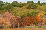 Fall Foliage along Salt Marsh Edge at Bell's Neck Conservation Area, Herring River, Cape Cod, West Harwich, MA