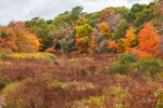 Colorful Fall Foliage in Wetlands and Forests along Herring River, Cape Cod, Harwich, MA