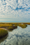 Tidal Creek in Salt Marsh near Lieutenant Island, Wellfleet Bay Wildlife Sanctuary, Cape Cod, Wellfleet, MA