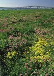Wildflowers at Watson Farm