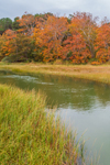 Fall Foliage along Stony Brook Flowing through Salt Marshes near Paines Creek Beach, Cape Cod, Brewster, MA