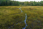Falls Brook Flowing through Wetlands, Richmond, NH