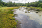 Small Pond and Wetlands at Headwaters of Whetstone Brook, Marlboro, VT