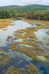 Wetlands in Early Autumn, Nelson, NH
