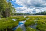 Wetlands at Beaver Pond, Birch Hill Recreation Area, Royalston, MA