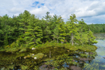 Forests along Meetinghouse Pond, Marlborough, NH