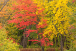Brilliant Fall Foliage along Katahdin Woods and Waters Scenic Byway, Grindstone Township, ME