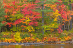 Brilliant Fall Foliage along East Branch Penobscot River at Grindstone Falls, Katahdin Woods and Waters Scenic Byway, Grindstone Township, ME