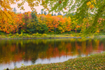 Fall Foliage with Reflections along Shoreline of East Branch Penobscot River, Katahdin Woods and Waters Scenic Byway, Medway, ME