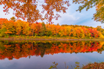 Brilliant Fall Foliage at Sunrise with Reflections along East Branch Penobscot River, Katahdin Woods and Waters Scenic Byway, Medway, ME