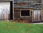Old Weathered Barn and Hawkweeds