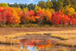 Brilliant Foliage Reflecting in Compass Pond Wetlands in Fall, View from the Golden Road, Piscataquis County, T2R9 WELS, ME