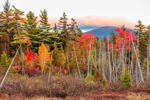 Wetlands and Forests in Fall with Lily Bay Mountain in Background, Moosehead Lake Scenic Byway, Beaver Cove Township, ME