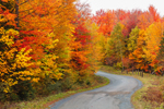 Country Road with Brilliant Fall Foliage, Moosehead Lake Region, Rockwood, ME
