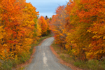 Brilliant Fall Foliage along Unpaved Country Road in Fall, Moosehead Lake Region, Misery Township, ME