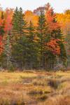 Fall Foliage and Wetlands along Tributary of Churchill Stream, Moosehead Lake Region, Misery Township, ME