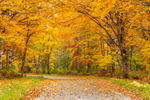 Unpaved Country Road through Brilliant Fall Foliage, Village of Wilsons Mills, Lincoln Plantation, ME