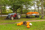Old Ford Tractor and Wooden Wagon with Pumpkins at Morning Glory Farm, Martha's Vineyard, Edgartown, MA