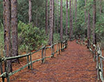 Chesser Island Homestead Trail