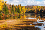 Wetlands and Fall Foliage along Magalloway River as it Winds through Umbagog National Wildlife Refuge, Great North Woods Region, Wentworths Location, NH