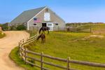 Cedar-shingled Barn with American Flag, Split-rail Fence and Horses in Pasture, Martha's Vineyard, Edgartown, MA